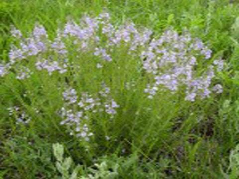 Как определить кислотность почвы с помощью растений